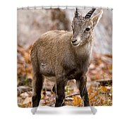 Ibex Pictures 10 Shower Curtain
