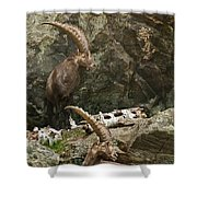 Ibex Pictures 112 Shower Curtain