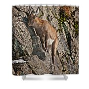 Ibex Pictures 151 Shower Curtain