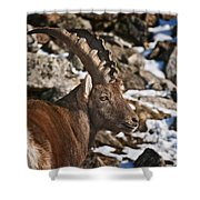 Ibex Pictures 160 Shower Curtain