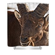 Ibex Pictures 169 Shower Curtain