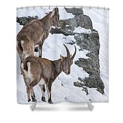 Ibex Pictures 171 Shower Curtain