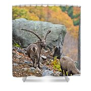 Ibex Pictures 174 Shower Curtain