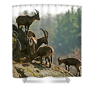 Ibex Pictures 176 Shower Curtain