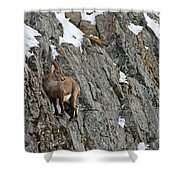 Ibex Pictures 183 Shower Curtain