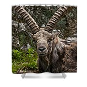 Ibex Pictures 190 Shower Curtain