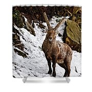 Ibex Pictures 22 Shower Curtain