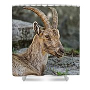 Ibex Pictures 38 Shower Curtain
