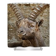 Ibex Pictures 40 Shower Curtain