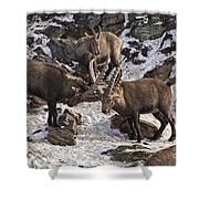 Ibex Pictures 83 Shower Curtain
