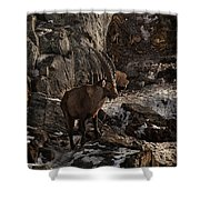 Ibex Pictures 86 Shower Curtain