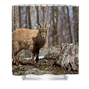 Ibex Pictures 92 Shower Curtain