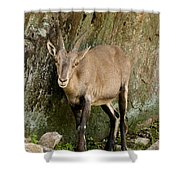 Ibex Pictures 115 Shower Curtain