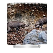 Ibex Pictures 134 Shower Curtain