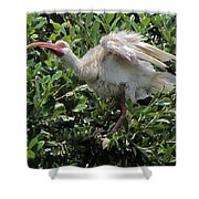 Ibis 12 Shower Curtain