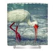 Ibis Feeding Shower Curtain