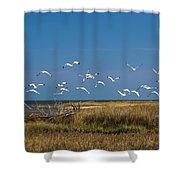 Ibis Flight Shower Curtain
