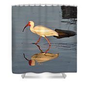 Ibis In Reflection Shower Curtain