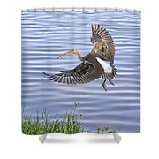 Ibis Incoming Shower Curtain
