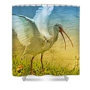 Ibis Talking Shower Curtain