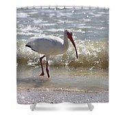 Ibis Walking The Beach Shower Curtain