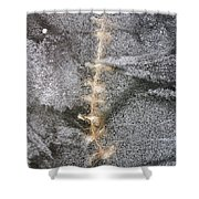 branch in ice - Madison - Wisconsin Shower Curtain