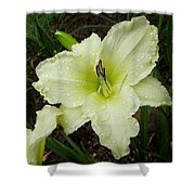 Ice Carnival Daylily Shower Curtain