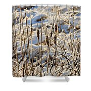 Ice Coated Bullrushes Shower Curtain
