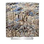 Ice Coated Bullrushes Shower Curtain