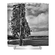 Ice Coated Tree Shower Curtain