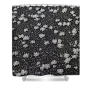 1m9335-ice Flowers On Black Ice Shower Curtain