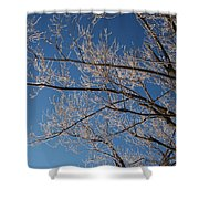Ice Storm Branches Shower Curtain