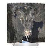 Iced Beef Shower Curtain