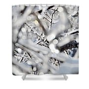 Iced Branches Shower Curtain