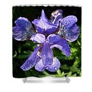 Iced Iris Shower Curtain