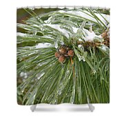 Iced Over Pine Cones Shower Curtain
