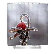 Iced Rose Hips Shower Curtain