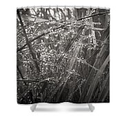Iceland Mist Black And White Shower Curtain