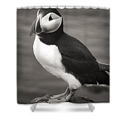 Iceland Puffin Shower Curtain