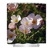 Icelandic Poppies Shower Curtain