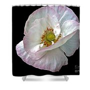 Icelandic Poppy Version Two Shower Curtain