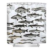 Ichthyology Shower Curtain
