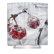 Icy Branch With Crab Apples Shower Curtain