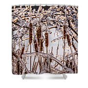 Icy Cattails Shower Curtain