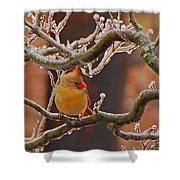 Icy Perch Shower Curtain