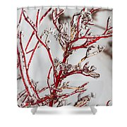 Icy Red Dogwood Shower Curtain