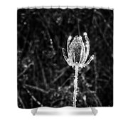 Icy Thistle In Monochrome Shower Curtain