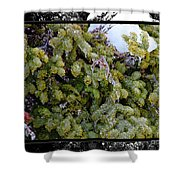 Icy Trees With Black And White Border Shower Curtain