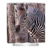 Idaho Falls - Tautphaus Park Zoo Shower Curtain