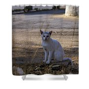 If Cats Could Talk Shower Curtain